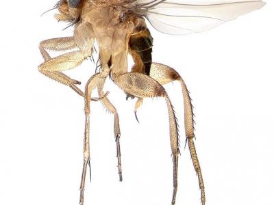 Природные враги пауков