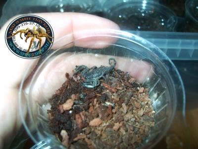 фото каменного скорпиона