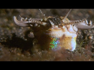 Подводный червь атакует