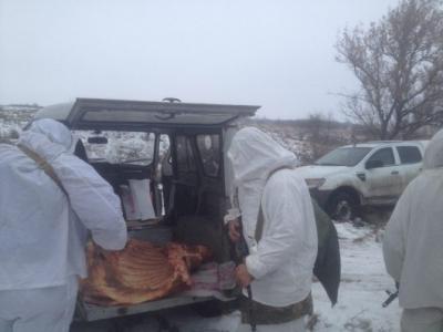 """Контрабандних 300 кг свіжого м""""яса не доїхали в Росію"""