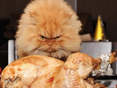 Стыдно признаться, что я сделала с соседским котом