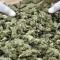 7 тонн марихуаны в Париже