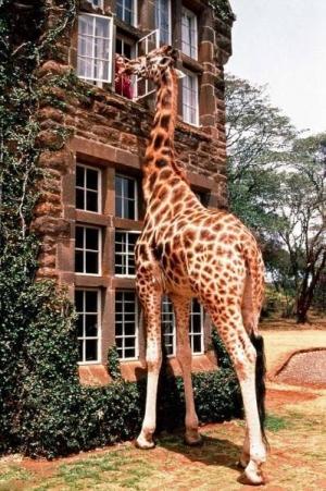 Величественные животные
