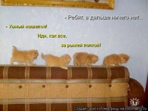 Веселая кошачья жизнь