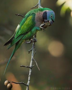 Необычайно красивые фото птиц от Таруна Данга