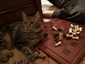 Обнаглевшие коты