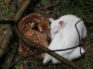 Альбиносы в природе