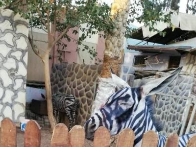 Когда в зоопарке нету зебры, а очень хочется ее иметь.