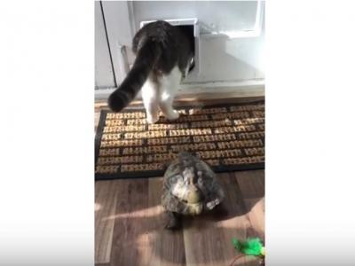 Когда ты черепаха, а в душе ты кот.