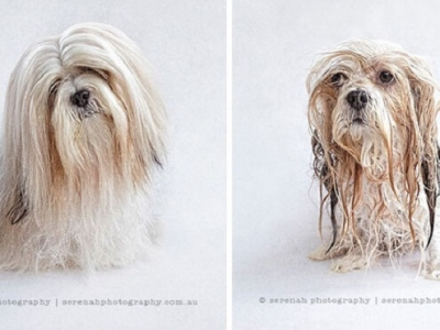 Милые мокрые собачки