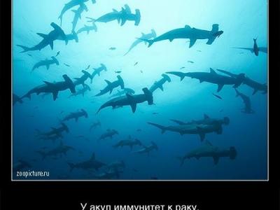 Интересные факты из мира живой природы