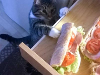 Кошаки воруют вкусняшки