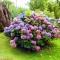Самые красивые и дорогие цветы в мире