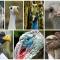Фото самых крупных птиц мира